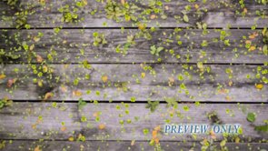 Weathered Wood And Green Leaves