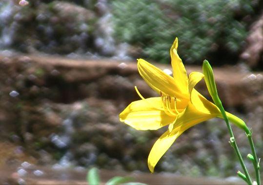 Summer Flower Motion Background