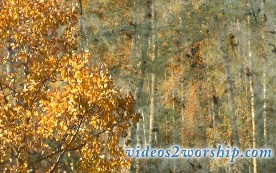 Aspen Trees: Fall Moving Worship