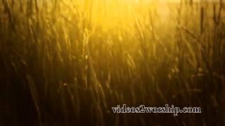 Tall Grass: Summer Worship Background