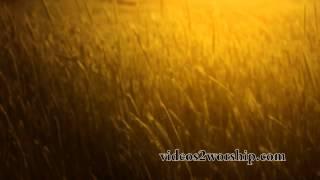 Tall Grass: Fall Worship Motion