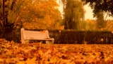 Autumn Motion: Bench In The Park