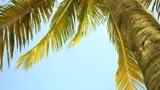Palm Tree Worship Motion Background