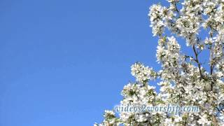 Mother's Day: Spring Flowers Loop