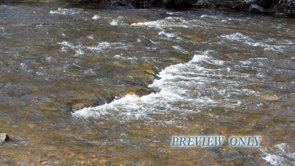 Nature Background Loop: Real River