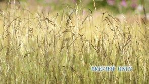 Summer Motion: Tall Grass Loop