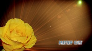 Free Mother's Day Motion: Yellow Rose