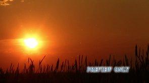 Nature Worship Loop: Sunset Motion