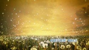 Dandelions: Summer Motion Background