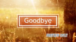 Golden Sun And Nature Goodbye
