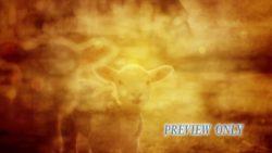 Lamb Of God Vintage Easter Loop