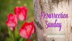Resurrection Sunday Tulips By The Cross