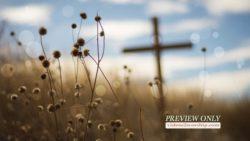 Cross In The Field Background
